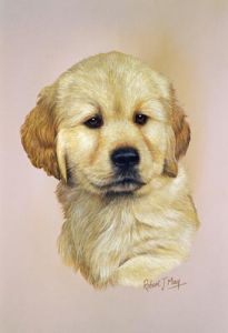 Golden Retriever Pup Print RMDH80